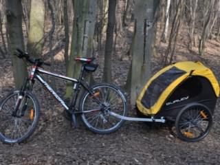 Test przyczepki rowerowej dla dzieci Burley Bee