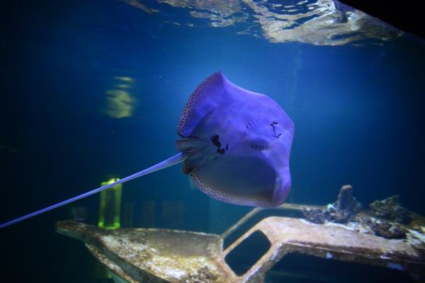 Akwaria Oceanika - atrakcje dla dzieci świętokrzyskie
